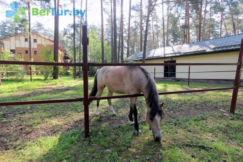 Отдых в Белоруссии Беларуси - база отдыха Бивак - Конный манеж