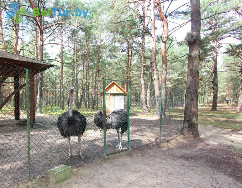 Отдых в Белоруссии Беларуси - база отдыха Комарово - Вольер