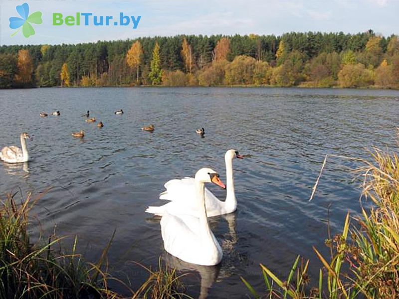 Отдых в Белоруссии Беларуси - оздоровительный комплекс Огонёк - Пляж