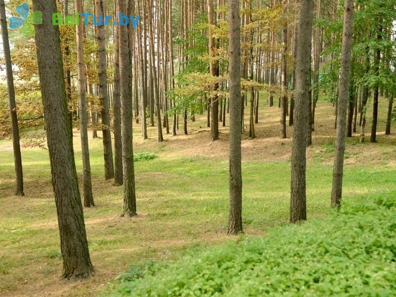 Отдых в Белоруссии Беларуси - оздоровительный комплекс Огонёк - Территория и природа