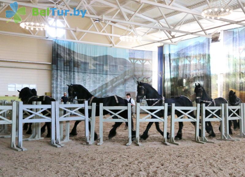 Отдых в Белоруссии Беларуси - туристический комплекс Наносы - Конюшня