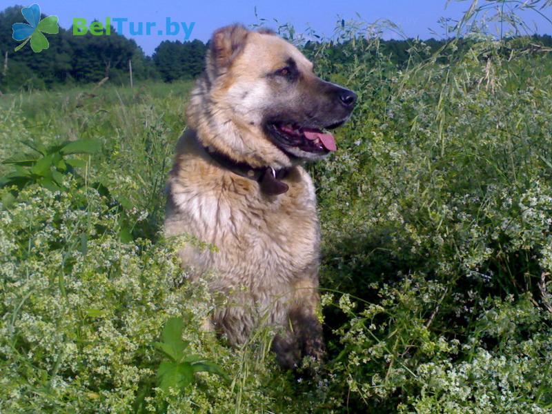 Отдых в Белоруссии Беларуси - усадьба Домашний очаг - Приём с животными
