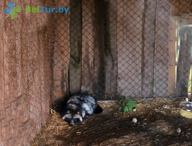 Отдых в Белоруссии Беларуси - усадьба Слуцкий страус - Вольер
