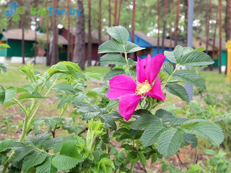Отдых в Белоруссии Беларуси - база отдыха Белое озеро - Территория и природа