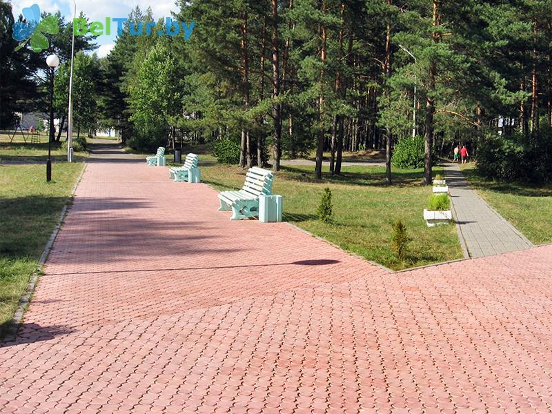 Отдых в Белоруссии Беларуси - база отдыха Нарочанка - Территория и природа