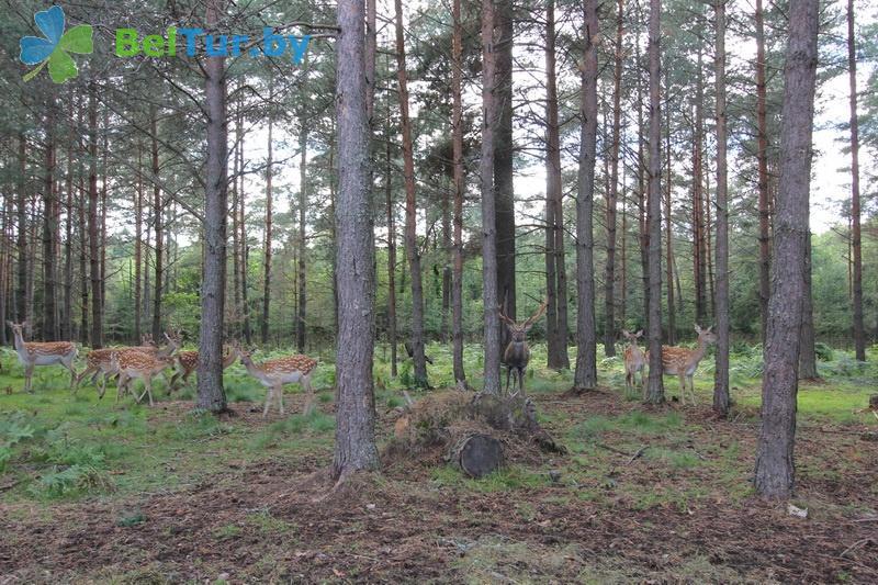 Отдых в Белоруссии Беларуси - дом охотника Крупский - Вольер