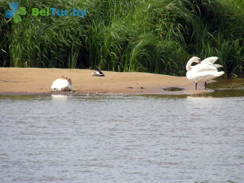 Отдых в Белоруссии Беларуси - кемпинг Дубы - Пляж