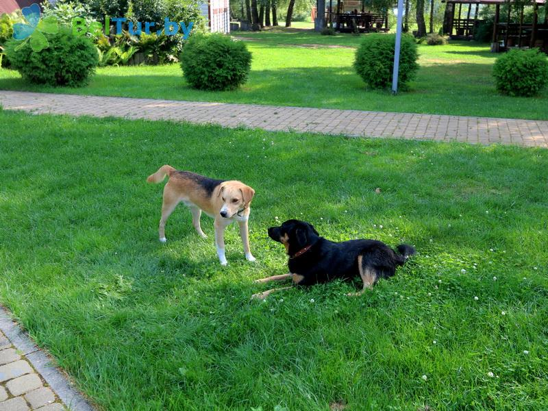 Отдых в Белоруссии Беларуси - база отдыха Без проблем - Приём с животными