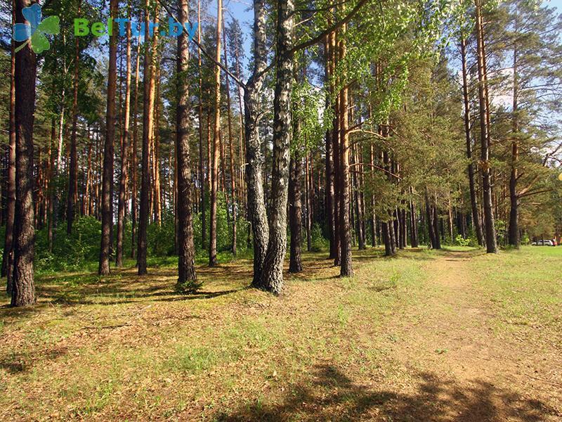 Отдых в Белоруссии Беларуси - гостевой дом Плавно - Территория и природа