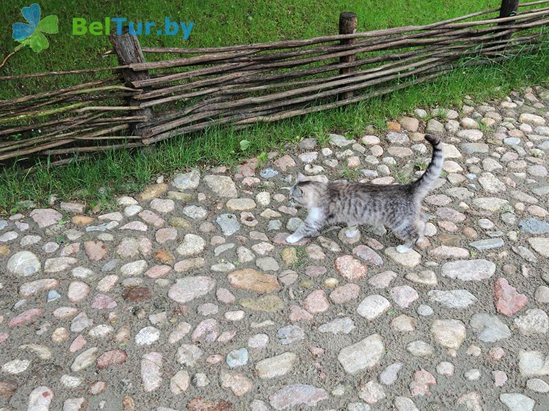 Отдых в Белоруссии Беларуси - дом охотника Переров - Территория и природа
