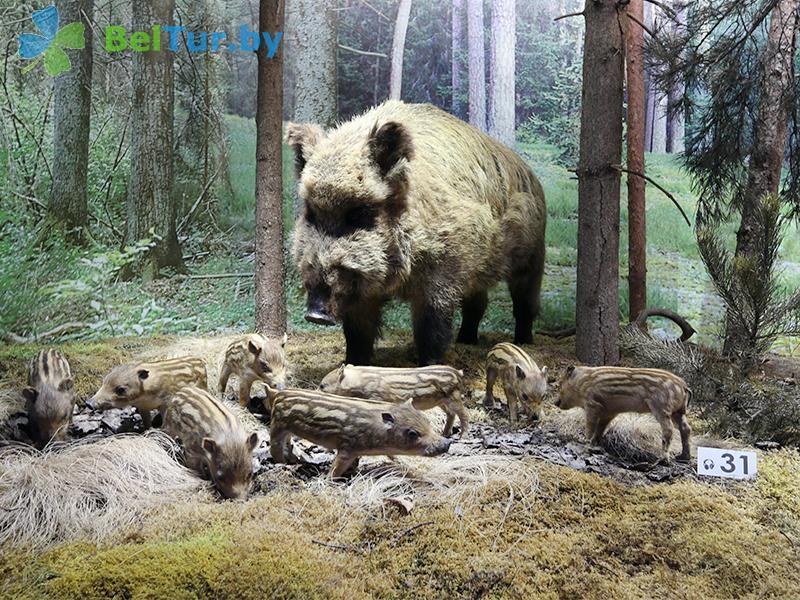 Отдых в Белоруссии Беларуси - гостиничный комплекс Каменюки - Музей
