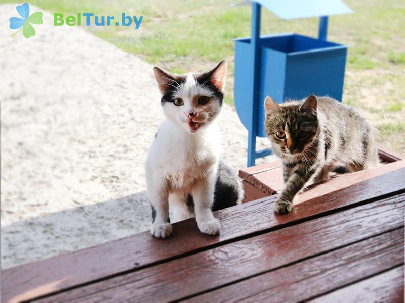 Отдых в Белоруссии Беларуси - туристический комплекс Старушки - Приём с животными
