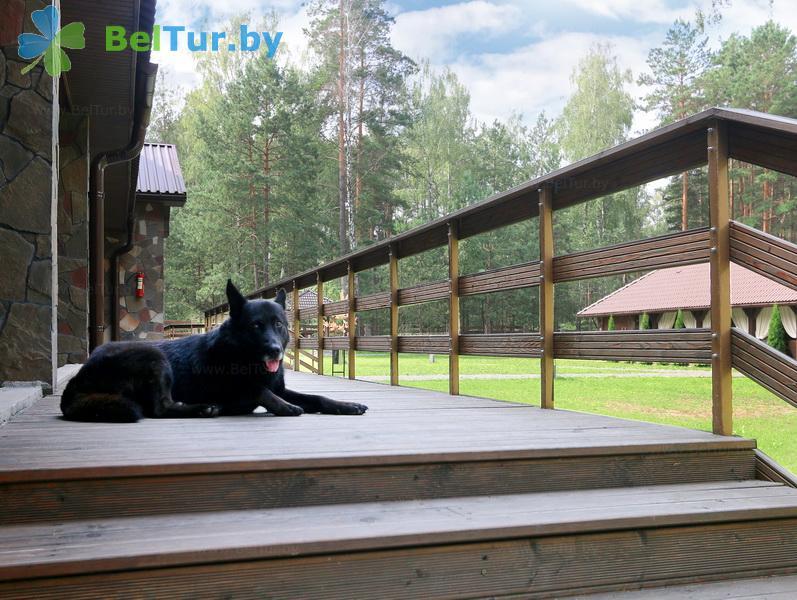 Отдых в Белоруссии Беларуси - база отдыха Лесная Гавань - Приём с животными
