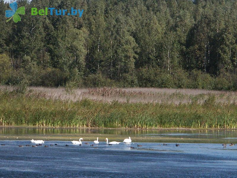 Отдых в Белоруссии Беларуси - дом охотника Гута - Водоём