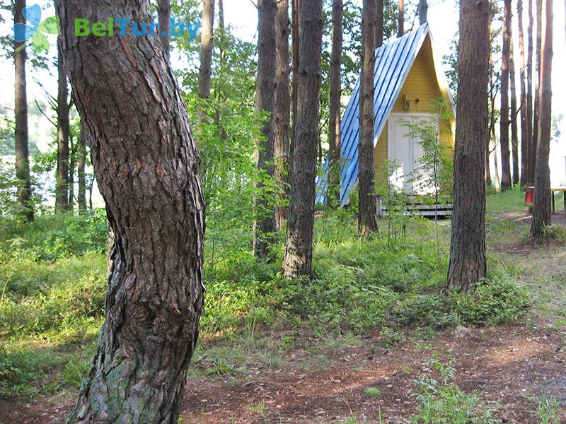 Отдых в Белоруссии Беларуси - база отдыха Яново - Территория и природа