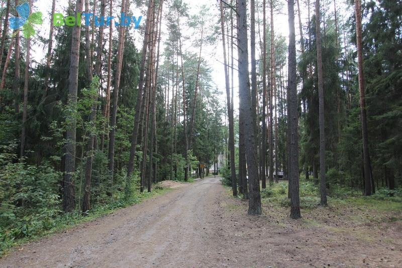 Отдых в Белоруссии Беларуси - база отдыха Лётцы - Территория и природа