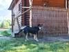 дом охотника Николаево - Приём с животными