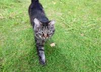 усадьба Вилейская околица - Приём с животными