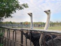 усадьба Слуцкий страус - Вольер