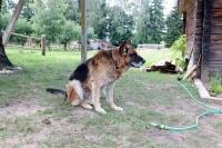 база отдыха Березовый двор - Приём с животными