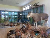 дом охотника Выгоновский - Музей