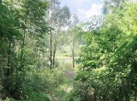 база отдыха Лесные дали
