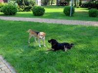 база отдыха Без проблем - Приём с животными