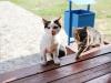 туристический комплекс Старушки - Приём с животными