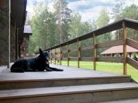 база отдыха Лесная Гавань - Приём с животными